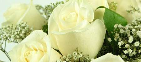 Meaning of the White Rose